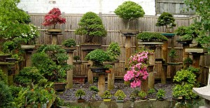 bonsai-small-garden